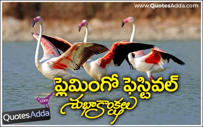 Image result for Flamingo Festival in Sullurpeta AP.