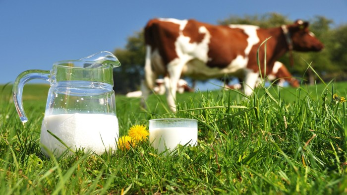 Image result for Image for Cow and its milk