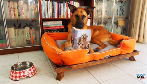 Take your Dog to Work 2018 - June 22 | Australian Dog Lover